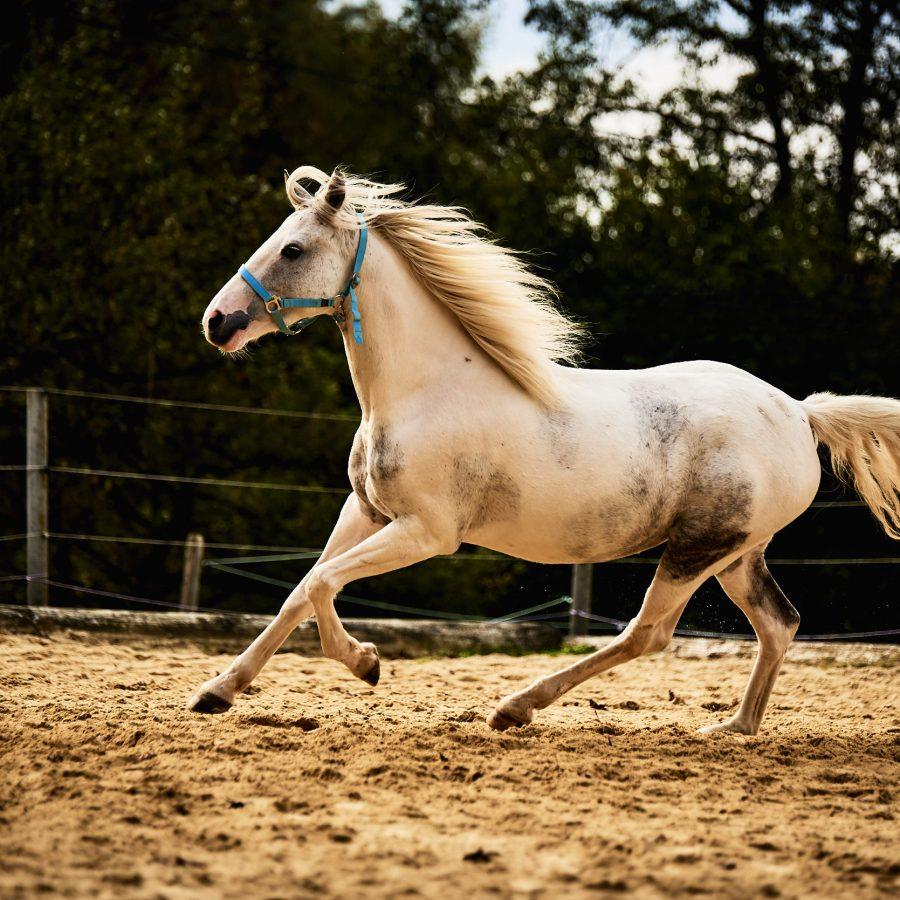 Pferd start